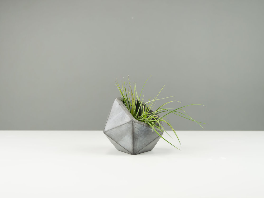 Copy of Dark Gray Concrete Planter for Air Plants by The Savvy Heart