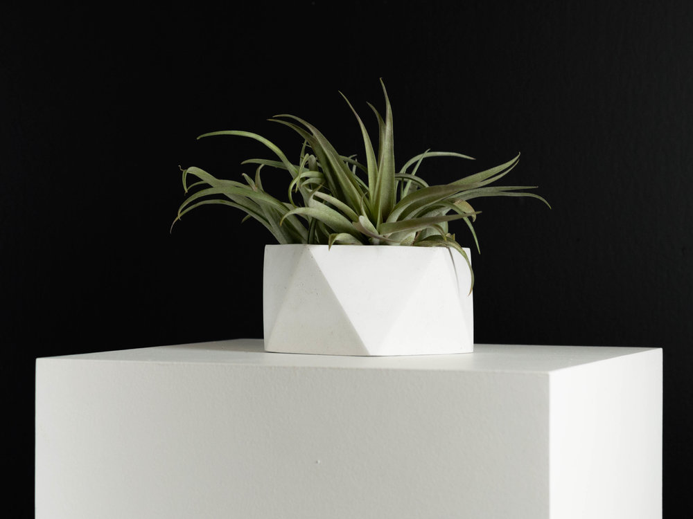 Tillandsia Air plant in Geometric Concrete Planter by The Savvy Heart.jpg