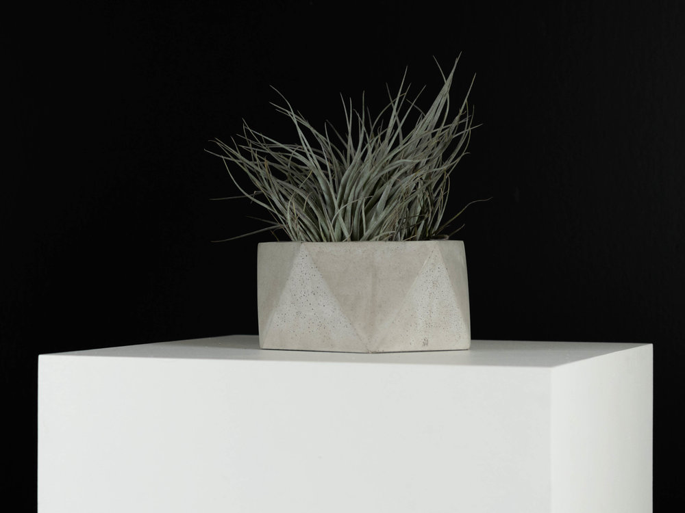 Tillandsia Air plant in Geometric Grey Concrete Planter by The Savvy Heart.jpg