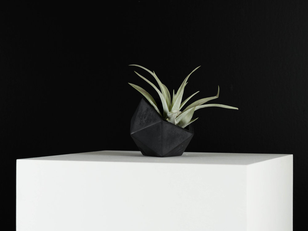 Tillandsia Air plant in Side Sitting Charcoal Geometric Concrete Planter by The Savvy Heart.jpg