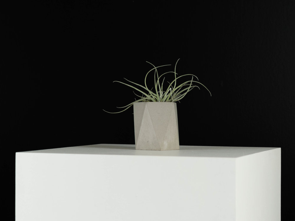 Tillandsia Air plant in Geometric Concrete Planter in Grey by The Savvy Heart.jpg