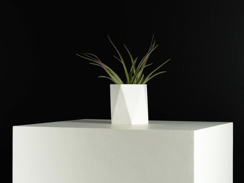 Tillandsia Air plant in Mini Geometric Concrete Planter by The Savvy Heart.jpg