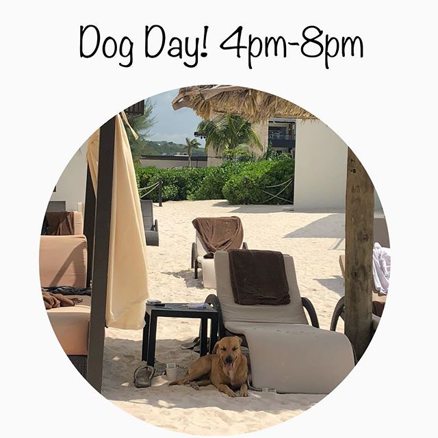 Dog day is today!! 50% off a service you have never tried before and the best part is it's on the live music day too!! Come hang out with us in the @villageatshirlington and spoil your pup! Can't come call and pre purchase and use later 💕