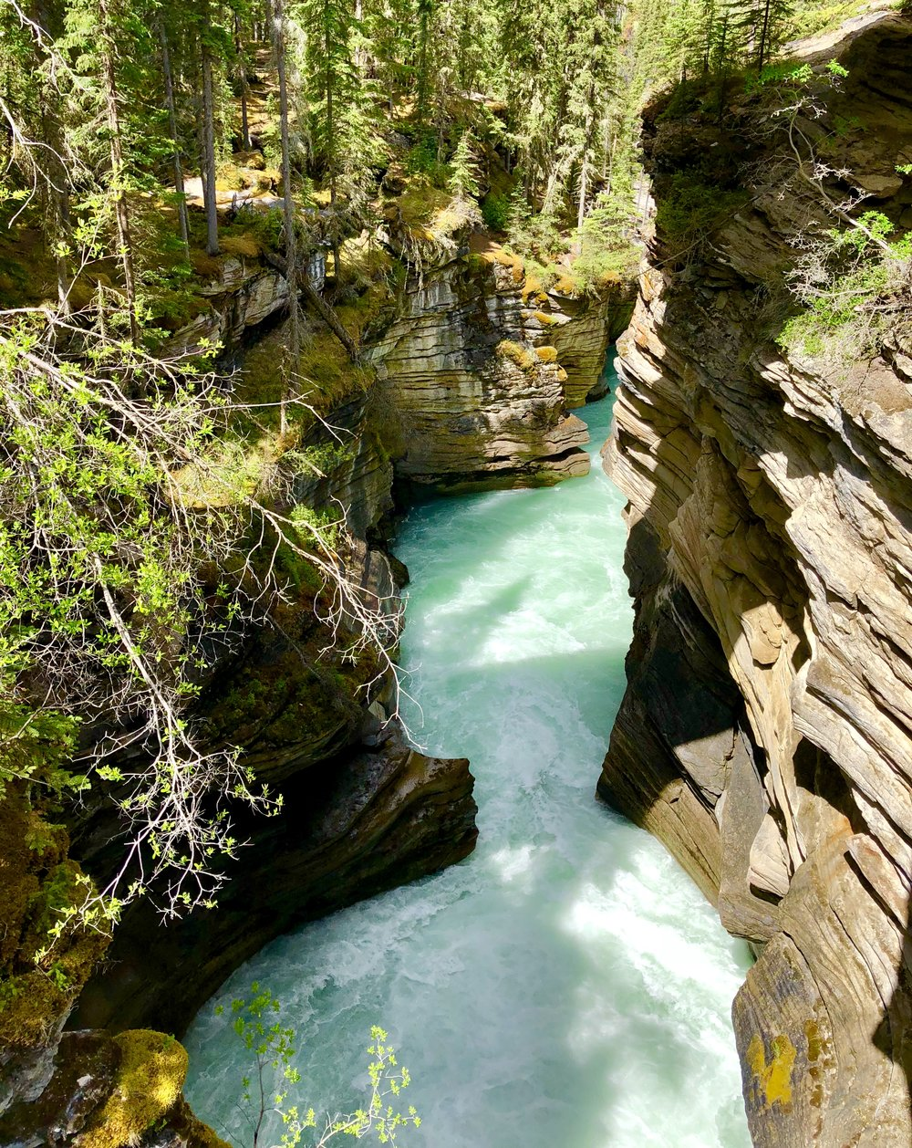 The Canyon at Athabasca Falls exposing the layers of quartzite and limestone (photo by: @thelotuspage)