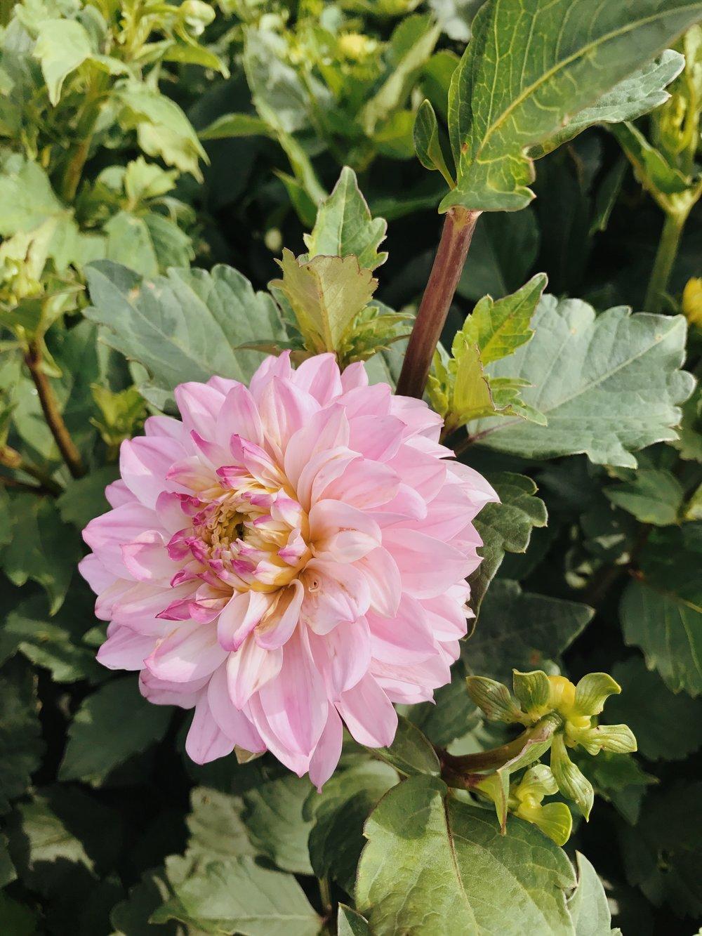 Blog Goldie Flower Stand
