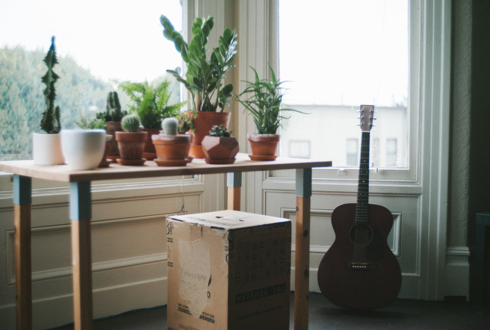 Living room succulent plants and guitar