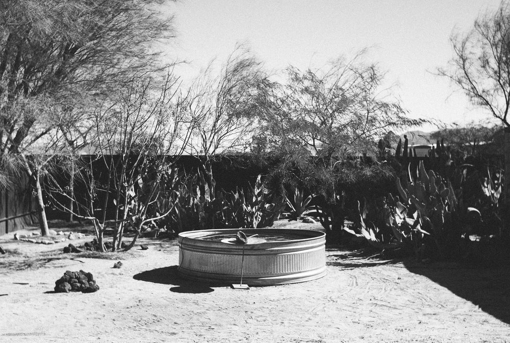 pond at mojave sands