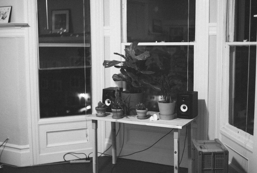 Plants and speakers