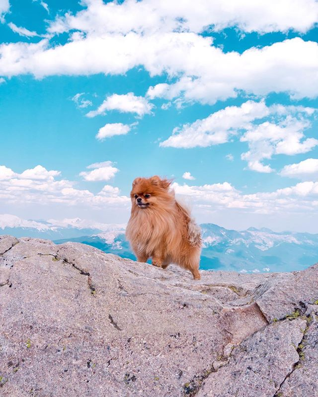I Am Phineas, King Of The Mountain 🤩🏳️ #majestic