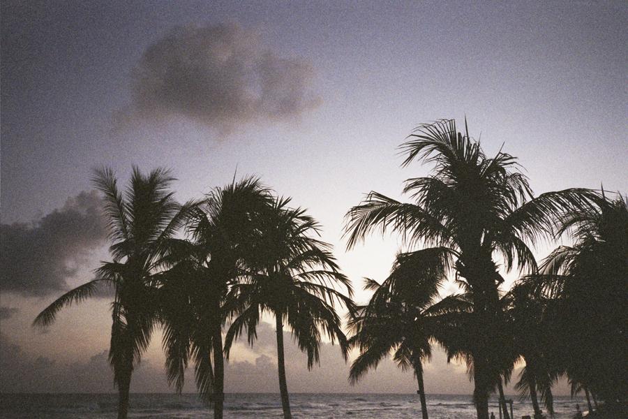 Barbados-Stephanie-Noritz-Palms.jpg