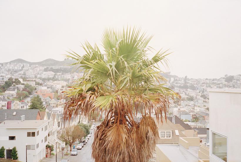 1-sf-palmtree-stephanie-noritz.jpg