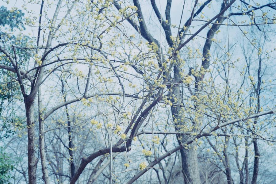 central-park-spring-stephanie-noritz.jpg