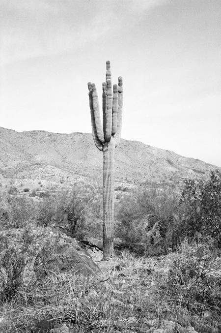 stephanie-noritz-Cactus.jpg