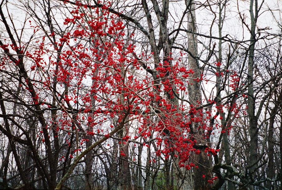 wildwood-berries-ohio-stephanie-noritz.jpg