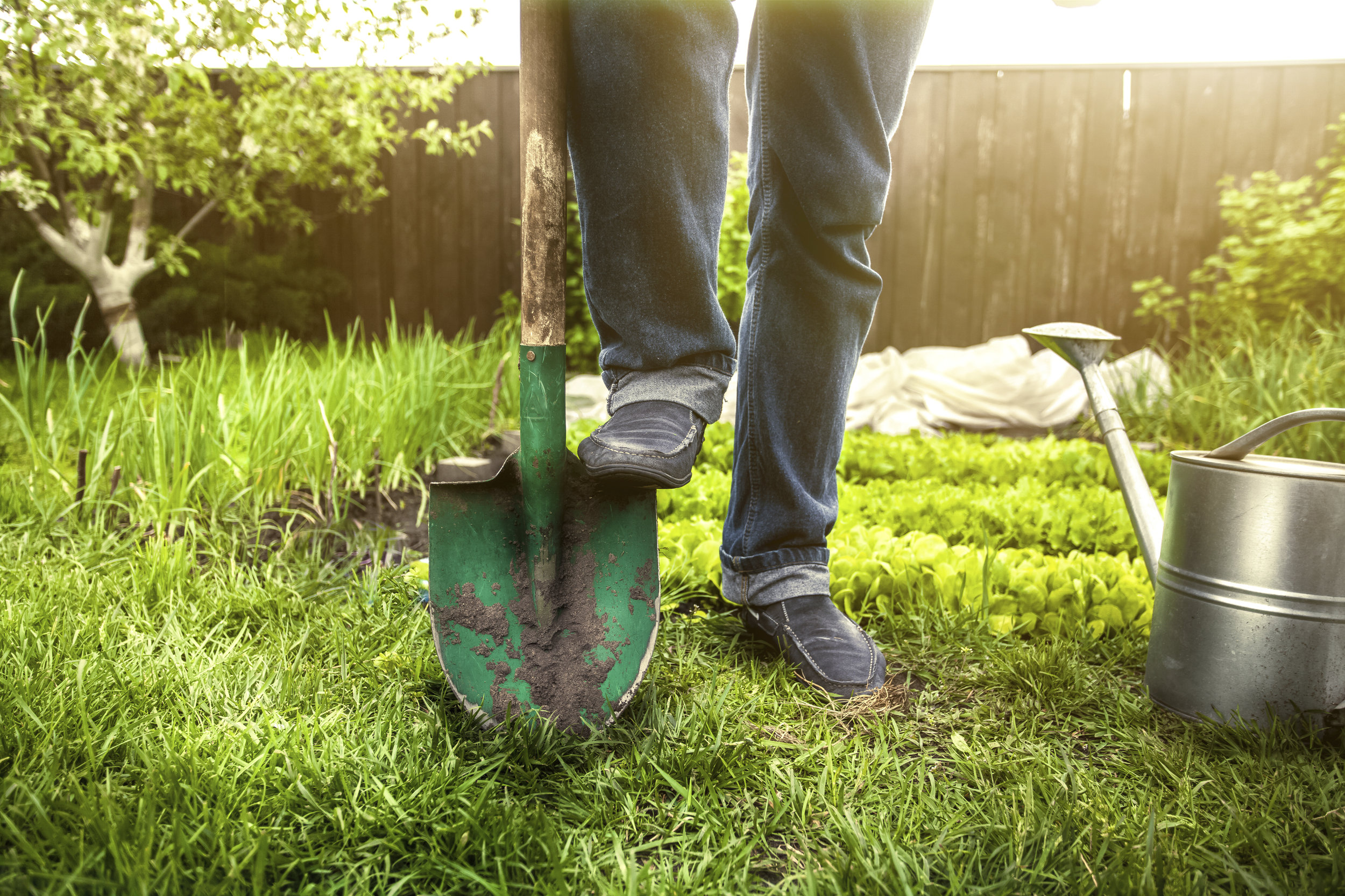 Closeup photo of man holding foot on shovel at garden at sunny day