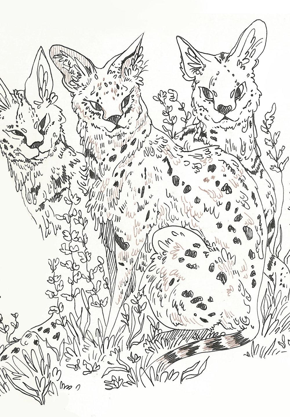 servals.jpg
