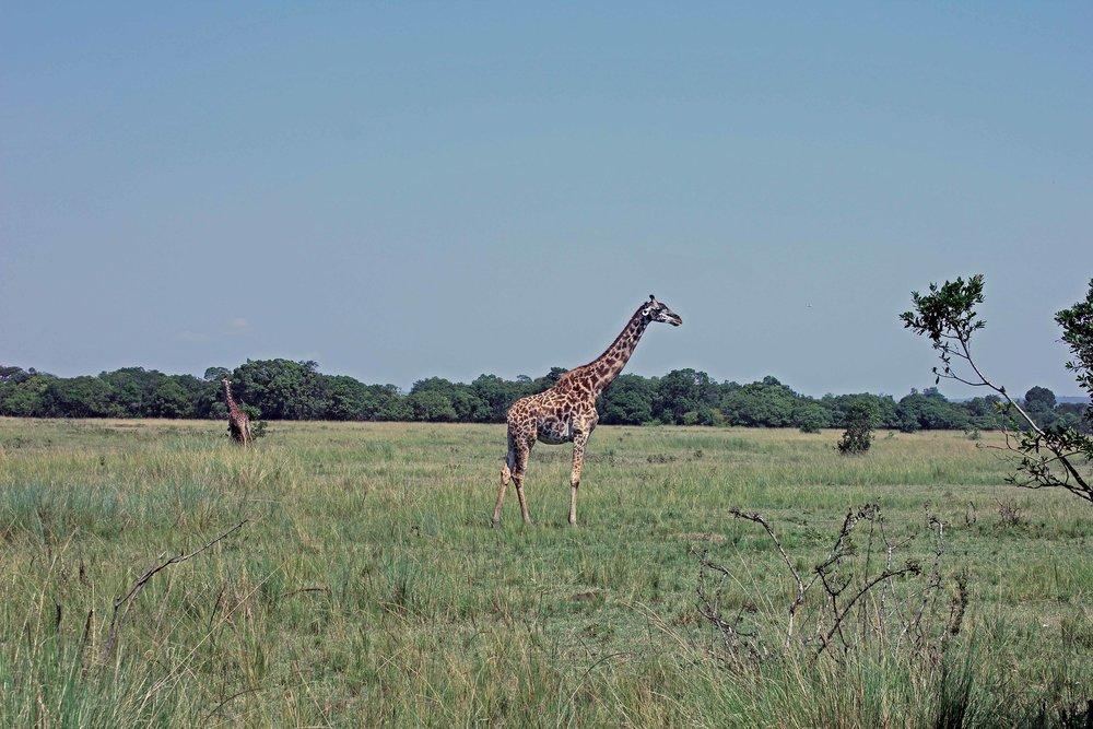 outofafricalowres2.jpg