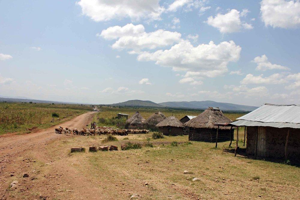 outofafricalowres4.jpg