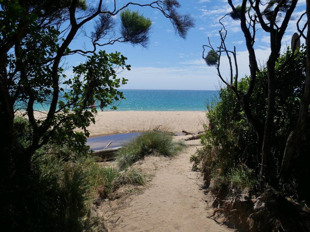 After a 2.5 KM trek from Totaranui, we arrived at beautiful Anapai Bay in Abel Tasman National Park (Jan 17).