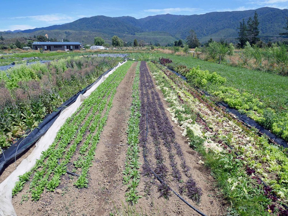 Puramahoi Fields offers weekly shares of veggie boxes (aka CSAs) to locals and area visitors, many from North America.