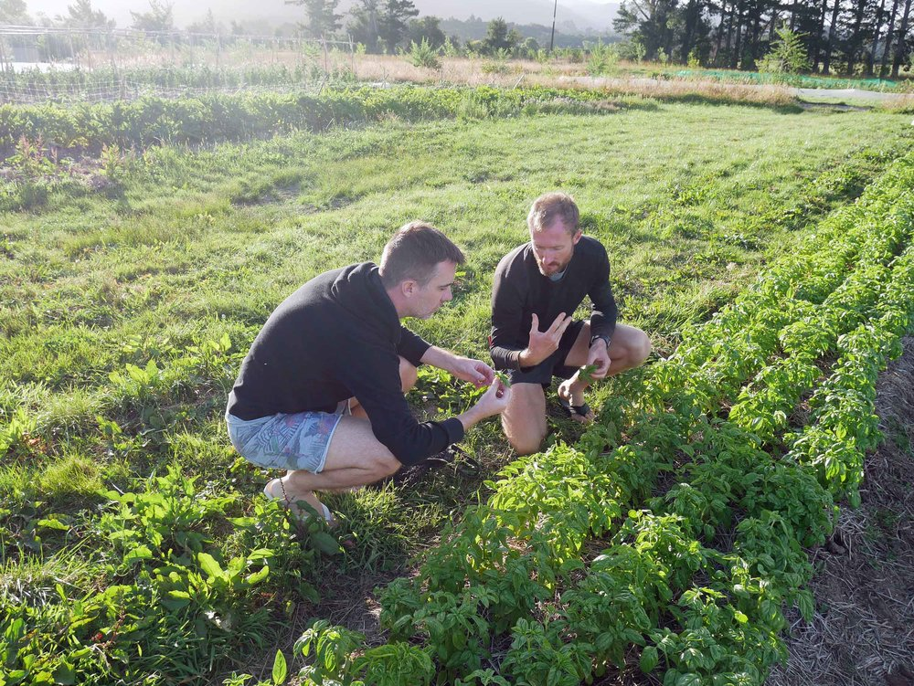 Shane shows Trey how to harvest basil for that evening's dinner.