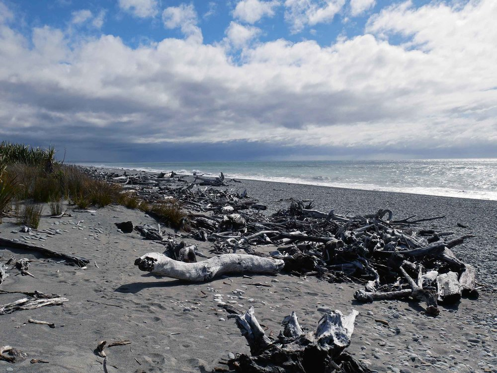 Still on the West Coast, just before Haast township, we found Ship Creek which offers both a dune and a bog walk (Jan 6).