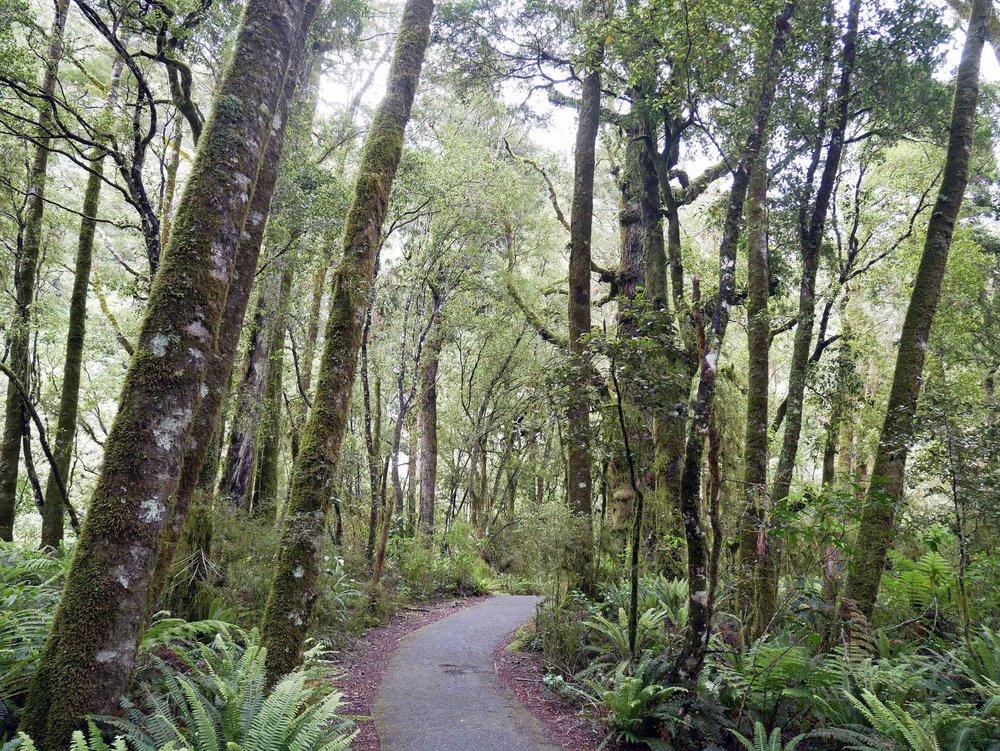 The Ship Creek bog walk took us through pre-historic vegetation and towering trees (Jan 6).