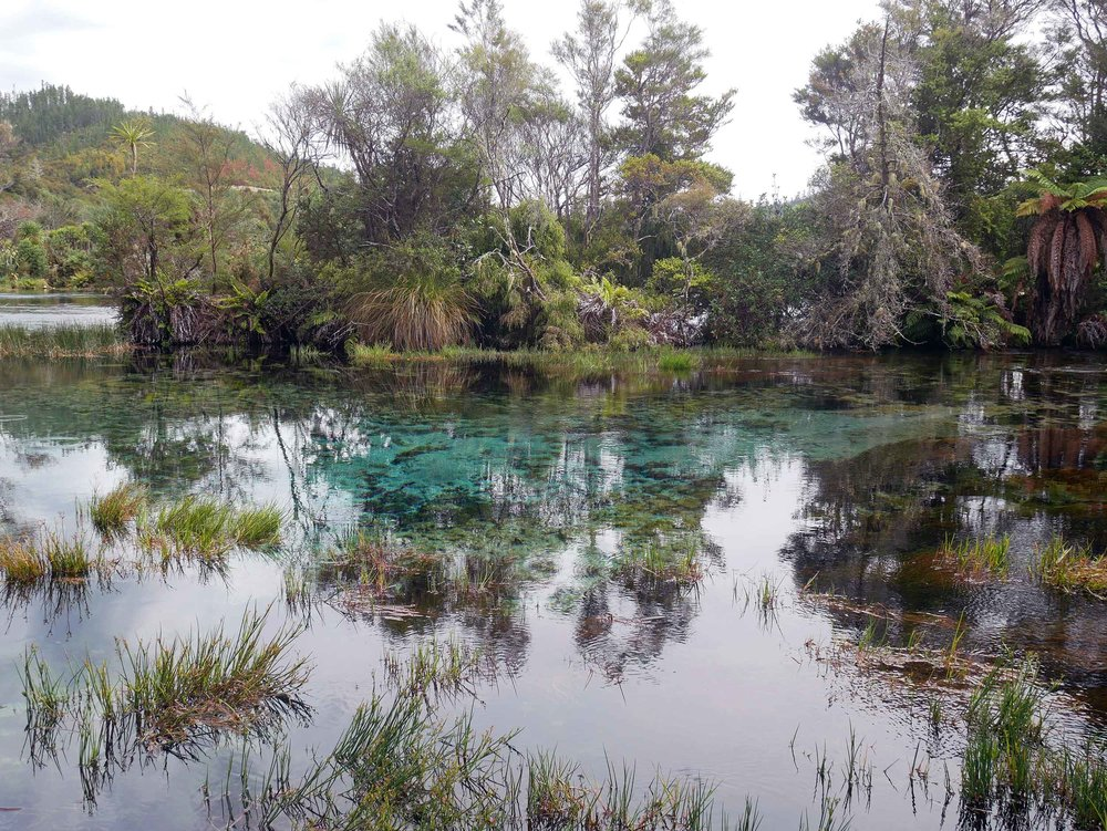 Golden Bay's Te Waikoropupu Springs, known locally as Pupu Springs, is famous for its water clarity (63 metres depth) and is spiritually significant to the native Maori people (Jan 15).
