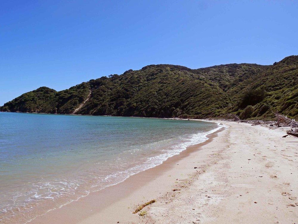 We spent a lovely morning enjoying one of the deserted beaches along Wainui Bay (Jan 16).