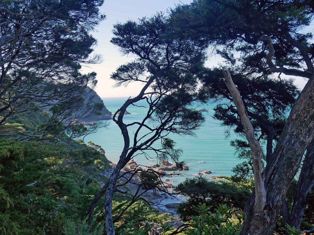 We scaled down the side of a cliff to reach Doctor's Beach, a secluded hideaway with views of Wainui Bay (Jan 16).