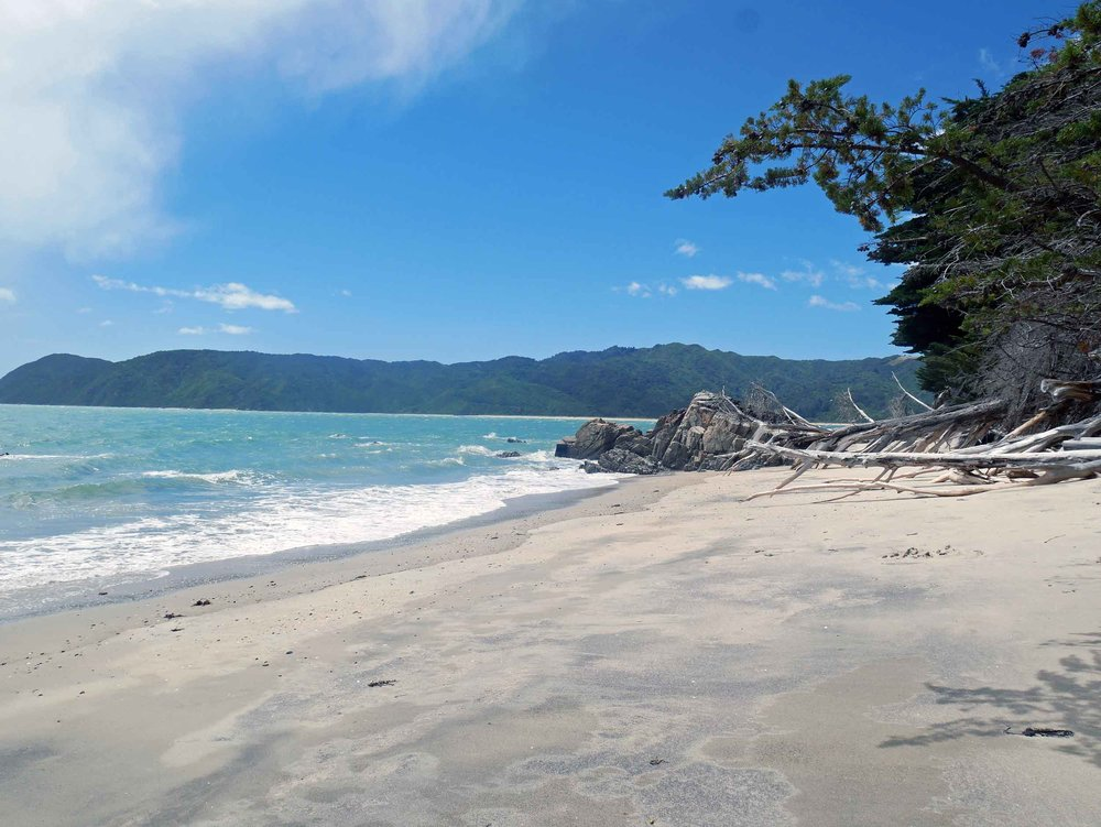 Doc's Beach was so special we had to visit again on our last afternoon in Golden Bay (Jan 19).