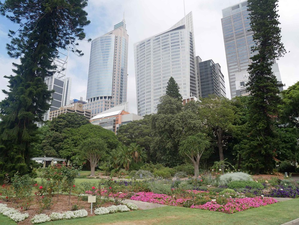 Sydney's beautiful (and free!) botanical garden showcases the country's exotic vegetation just outside the CBD (Feb 4).