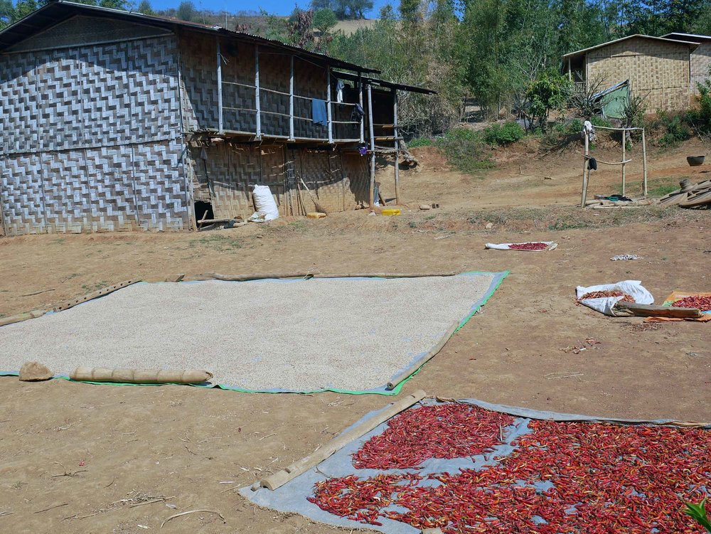 A common sight, rice and red chiles, which are grown in abundance in this area, spread out on canvases to dry in the hot sun (Feb 20).
