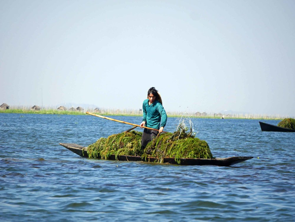 Harvesting lake-bottom weeds allow farmers to create floating beds for their vegetable gardens (Feb 21).