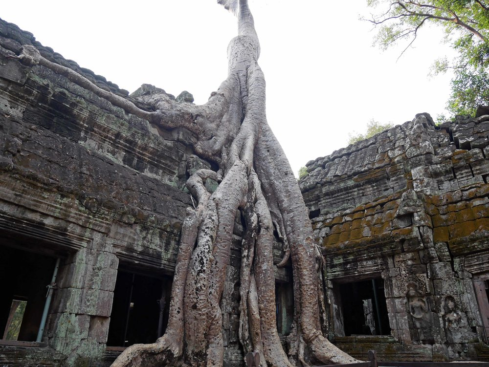 Appearing in Tomb Raider, Ta Prohm is one of the more popular sites within the Angkor Wat complex (Feb 27).
