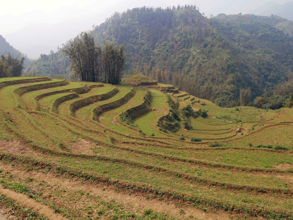 View of the impressive terraced rice fields taken in while trekking to Lao Chai village near Sapa (Mar 24).