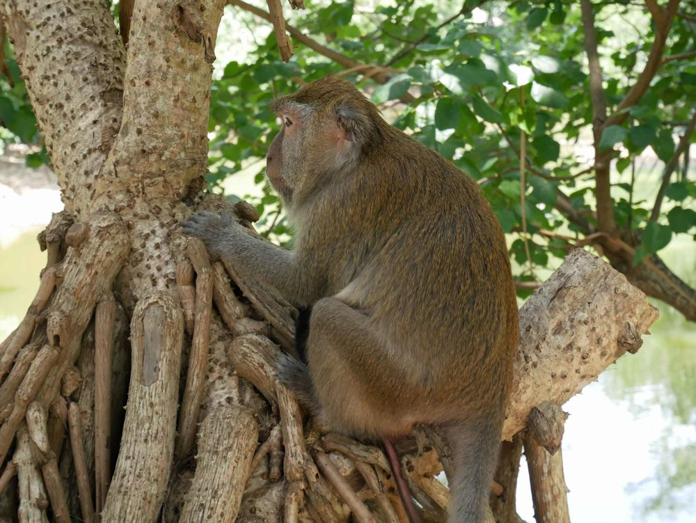 The park is also home to a gang of curious macaques who search the beach for unattended bags of food.