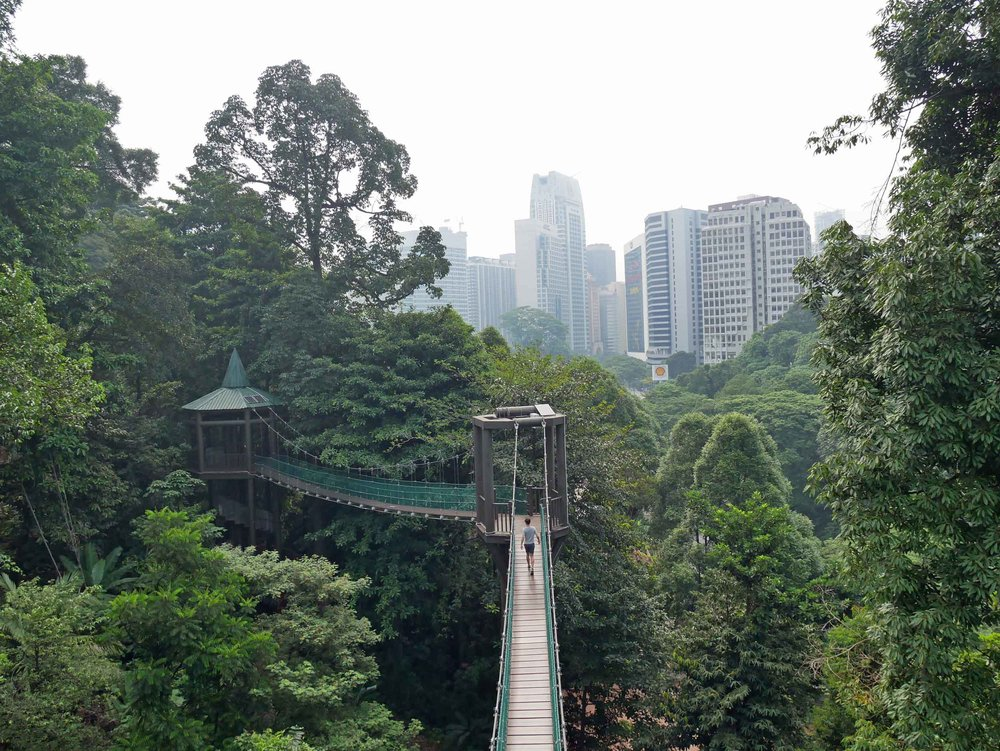 At KL Eco Park, at the base of the Menara Tower, the canopy walk takes you into the remaining rainforest in the center of KL.