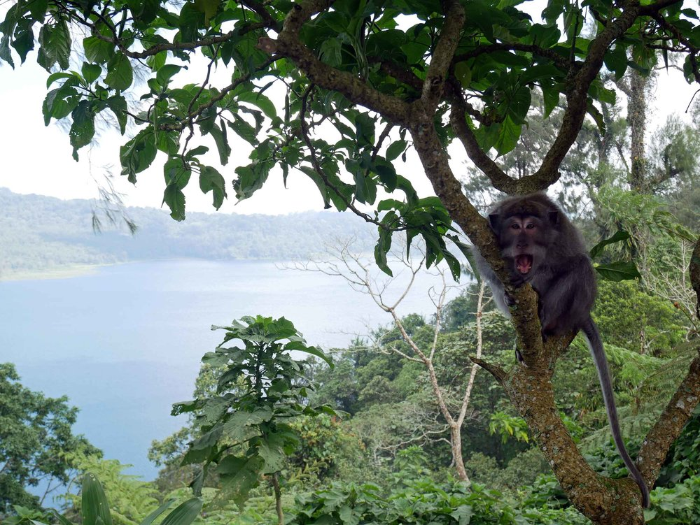 As we made our way to Munduk, the climb eventually gave way to this panoramic view of Tamblingan Lake, which is patrolled by embolden macaques (June 2).
