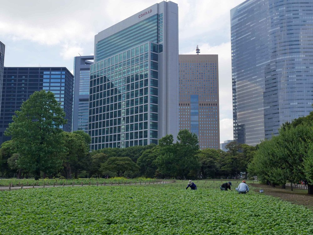 Gardeners tending to Hama-rikyu's famous landscapes along Tokyo Bay.