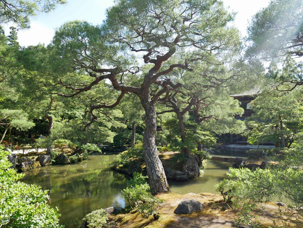 The meticulously manicured gardens Ginkaku-ju.