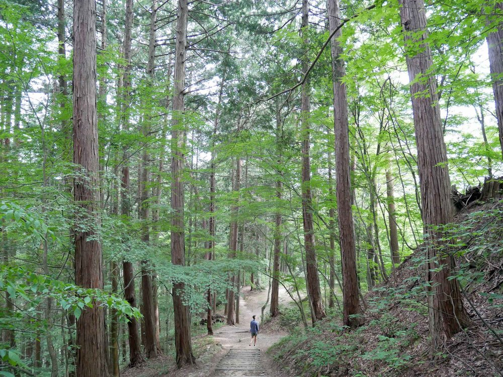 We ended our day with a hike in Shiroyama park, which boasted panoramic views of the city.