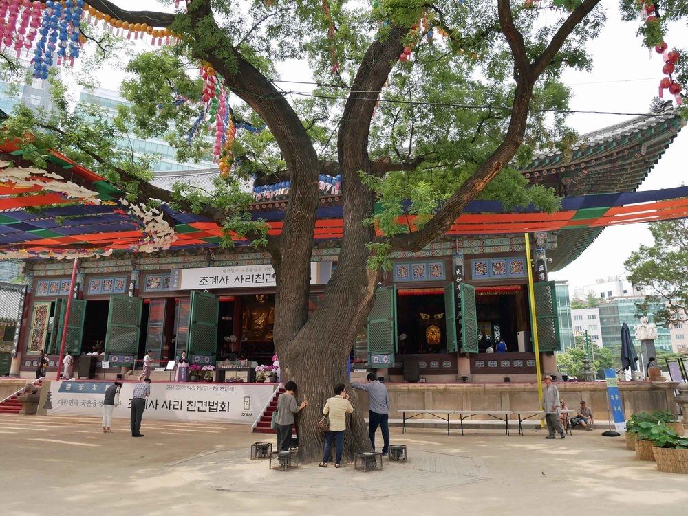 The temple complex, which was first built in the 14th century, includes the Dharma Hall with an ancient tree in the courtyard upon which people were praying.