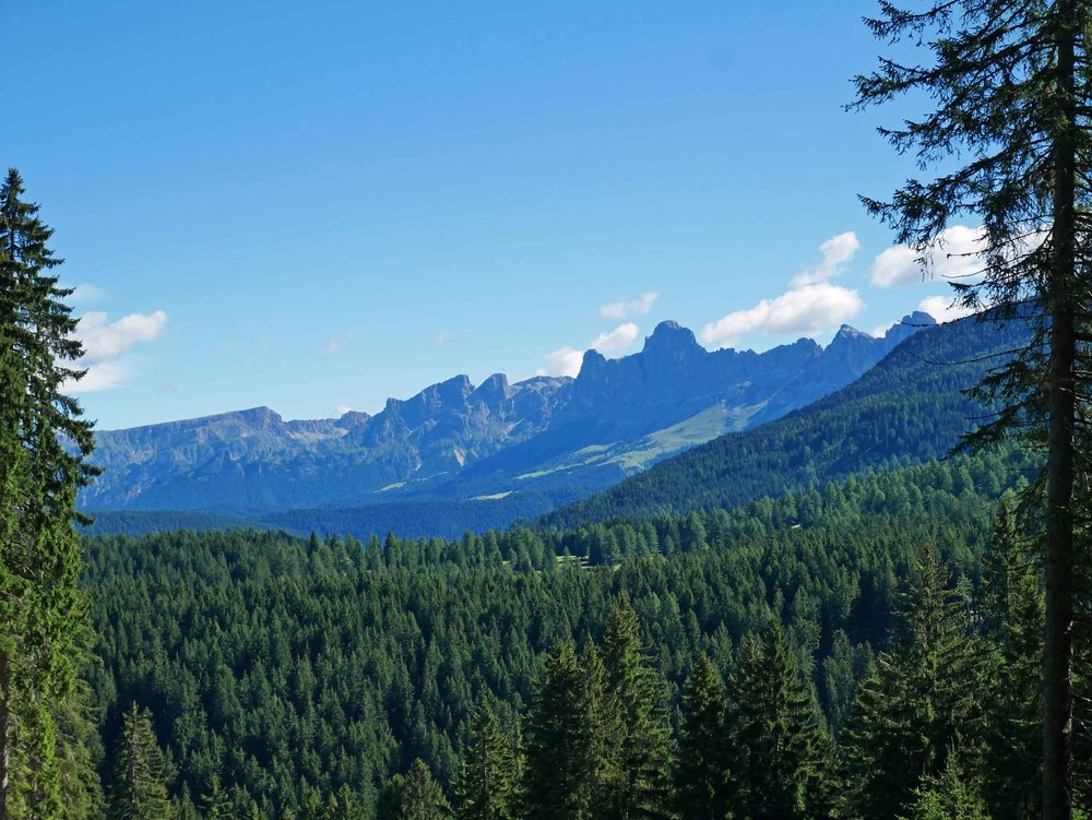 The next day, we hiked in the Forest di Fiemme with offered stunning views of the Fiemme range (July 25).