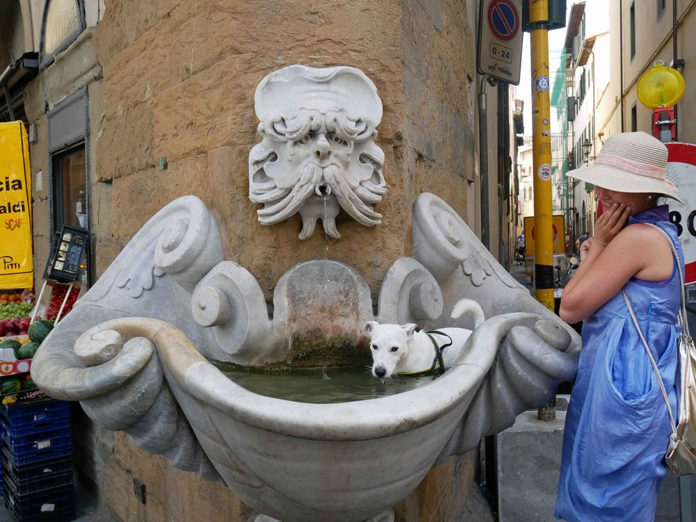 A classic Italian water fountain with an un-classy dog taking a bath.