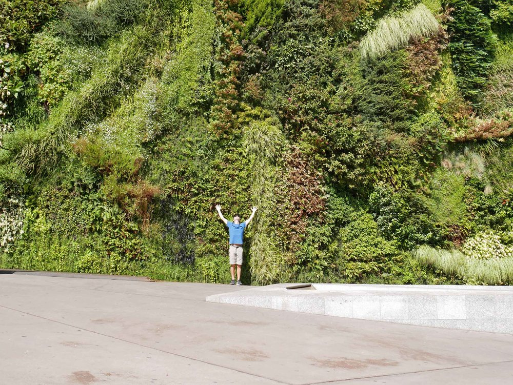 Martin trying to climb the Green Wall, a project of CaixaForum; it's 24 metres high and contains 15,000 plants of more than 250 species.