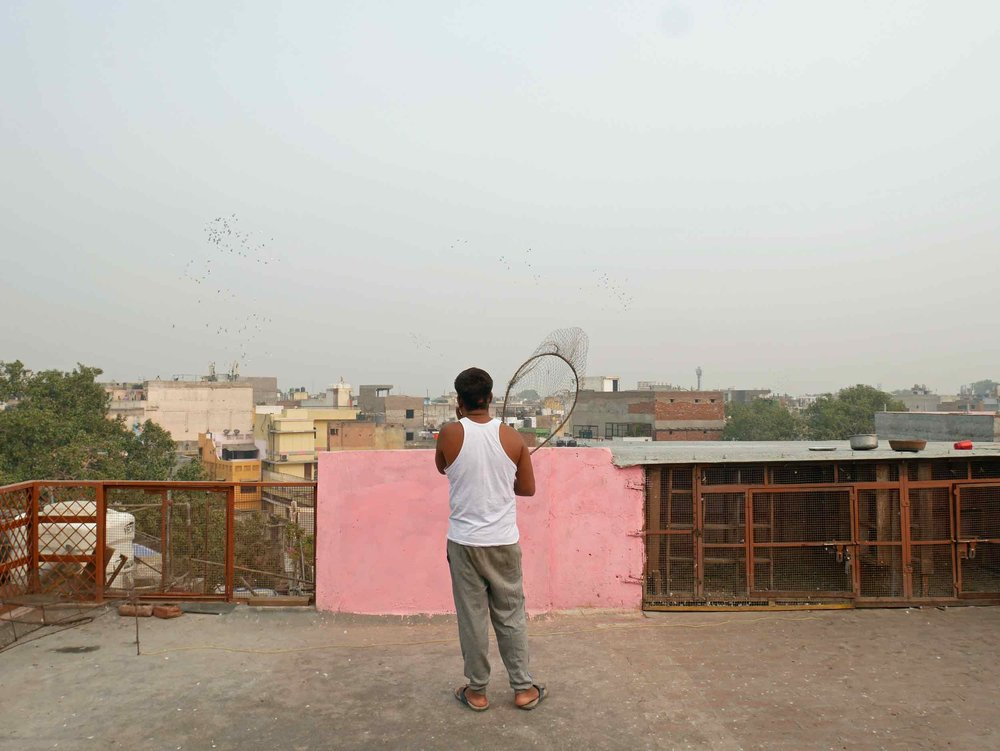 Pigeon gaming is a very competitive (and allegedly, highly addictive) sport that has keepers calling their flocks every morning from their roofs in Old Delhi.