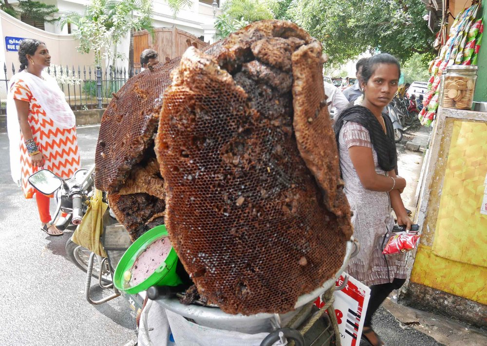 Wild honey being sold from a honeycomb on the back of a man's moped!