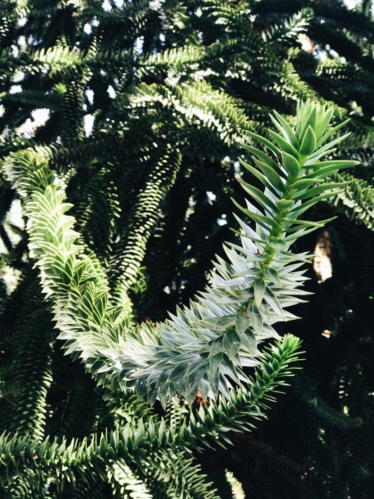 A Weekend on Whidbey Island — Mik Marrujo