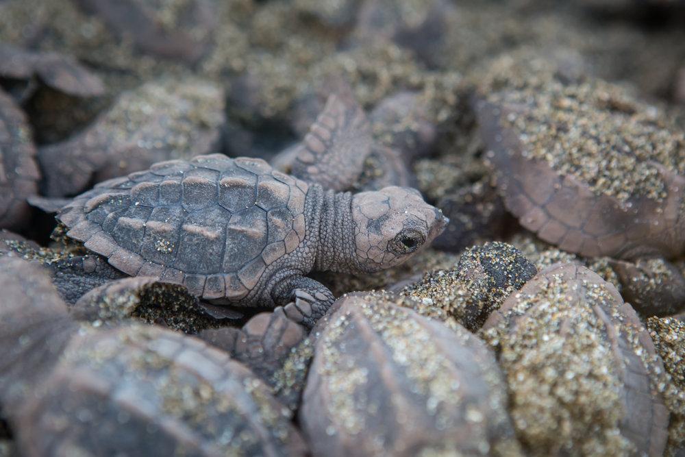 Turtles-21.jpg